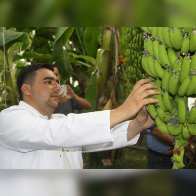 Banana farming seminar was completed.